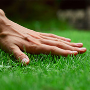 quality turf at your fingertips