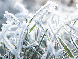 frost winter care turf