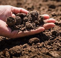 soil trueturf
