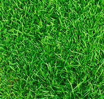 A lush green lawn from trueturf